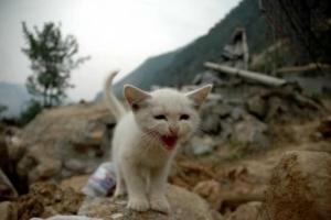 1980 - 2010: 30 anni di medicina veterinaria delle catastrofi